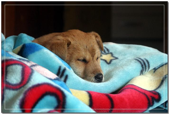 담요에서 졸고있는 대교
