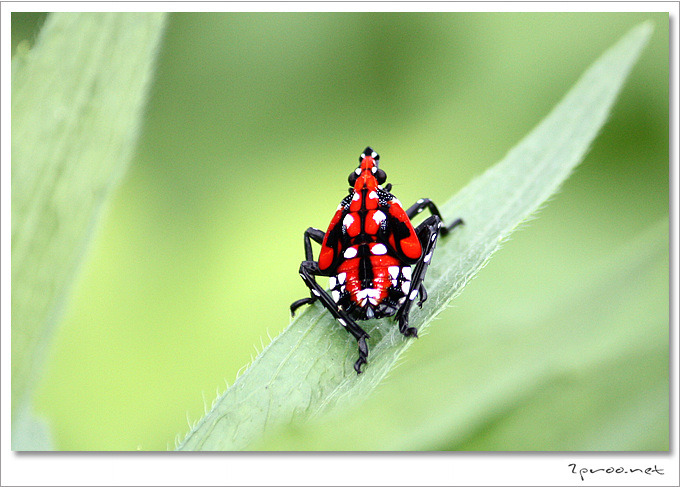 곤충 사진