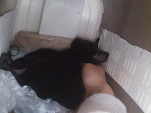 이동장 안에서 자는