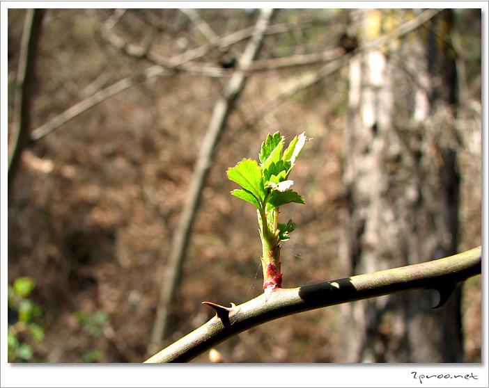 봄의 전령사 새싹 사진