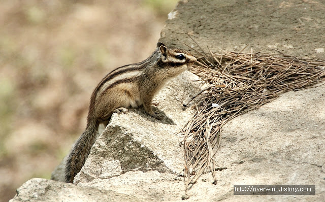 다람쥐,リス,松鼠,गिलहरी, Boundary squirrels