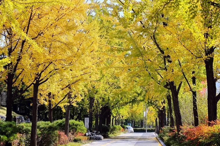 위례성길 올림픽공원데이트 단풍나무길