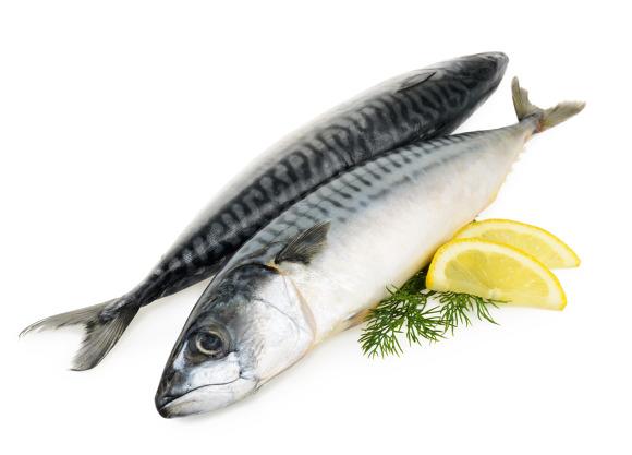 등푸른 생선