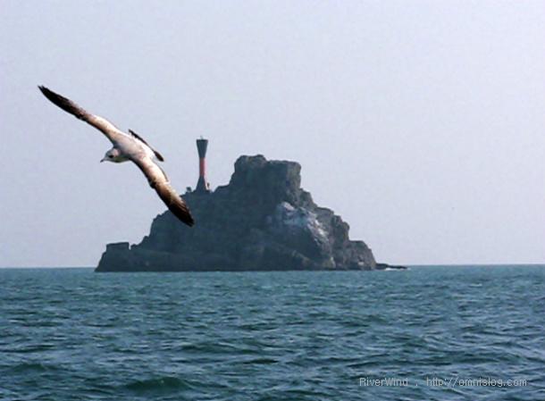 부산갈매기 주전자섬
