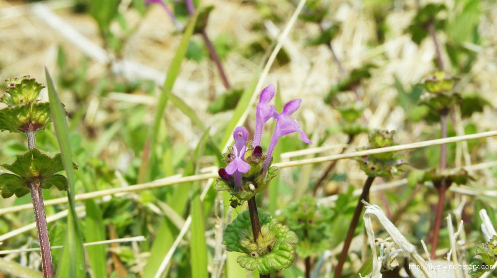이름 모르는 작은 꽃들