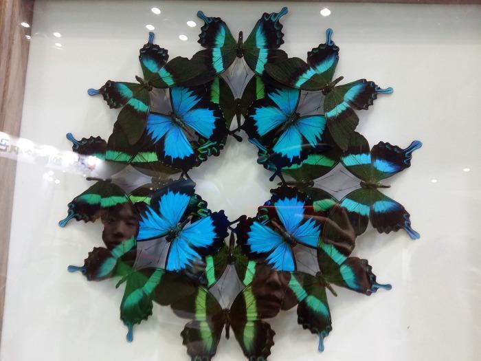 여름방학 아이와 함께 도심에서 신비한 관람과 체험을 _2017 신비한 세계 곤충박람회