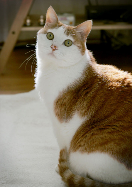 고양이일광욕 고양이귀여운사진 야옹군이야기