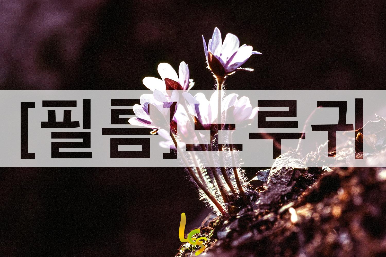[필름]노루귀