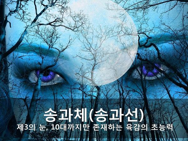 송과체(송과선) - 제3의 눈, 10대까지만 존재하는 육감의 초능력