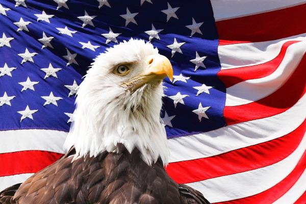 미국 독수리 USA Eagle
