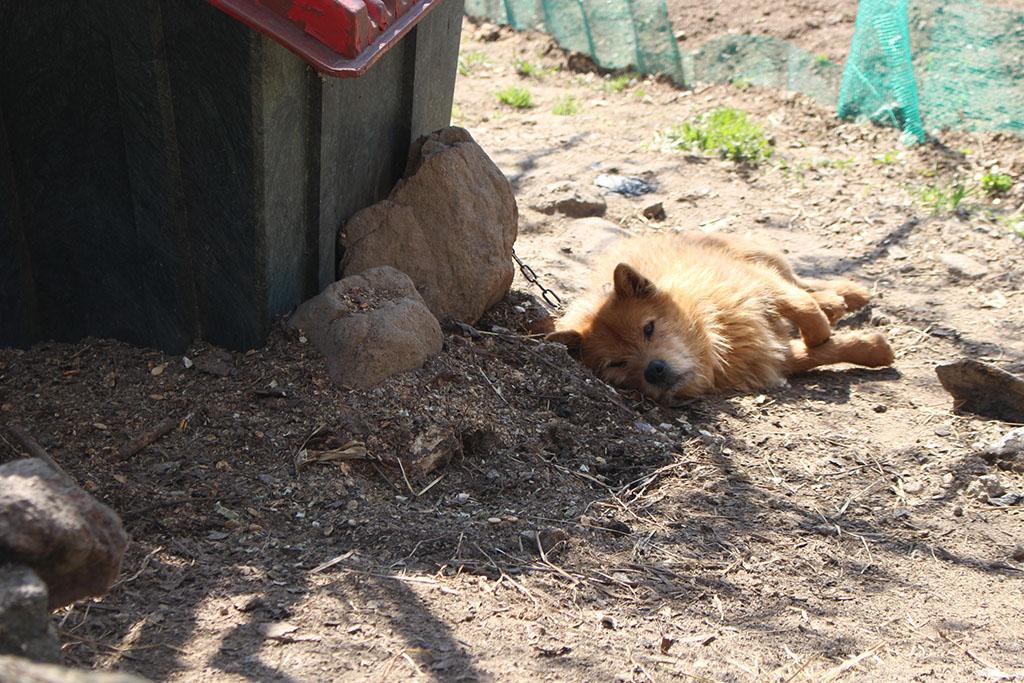 상위마을 강아지 낮잠