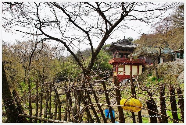 미륵사 봄풍경