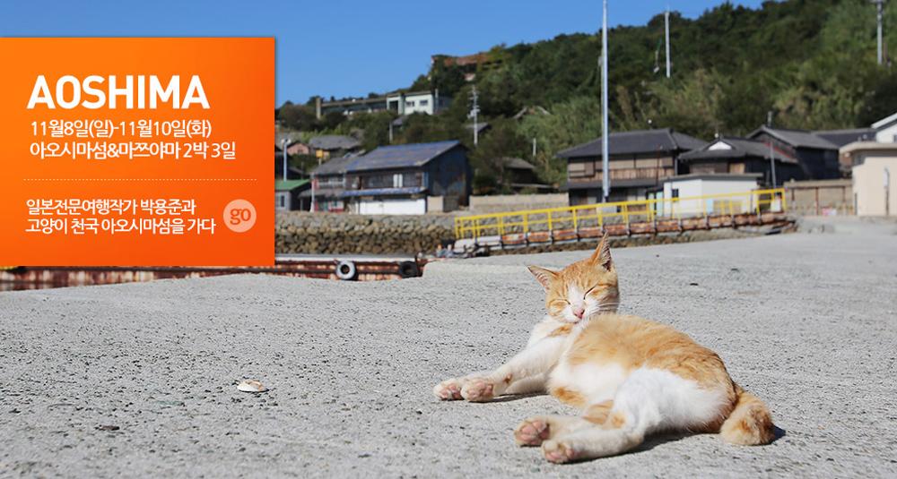 여유로운 고양이 섬과 따뜻한 일본 도고 온천, 먹고찍고 아오시마 마츠야마 2박3일 여행