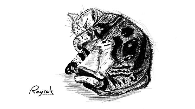 고양이 11년 스케치