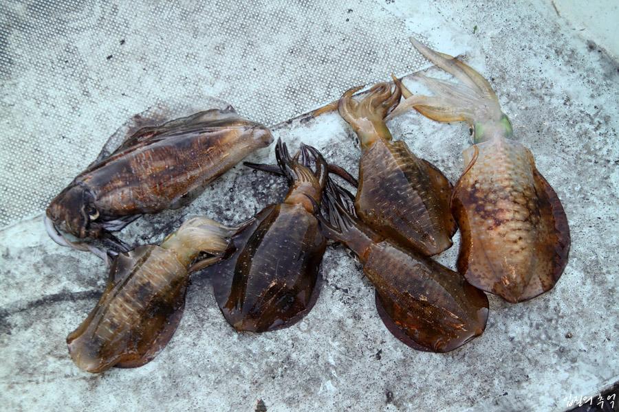 중독성 있는 맛, 무늬오징어 먹물 숙회 만들기