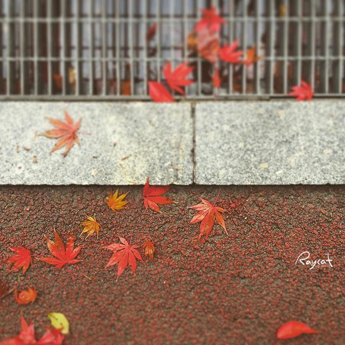 가을비 오는 날