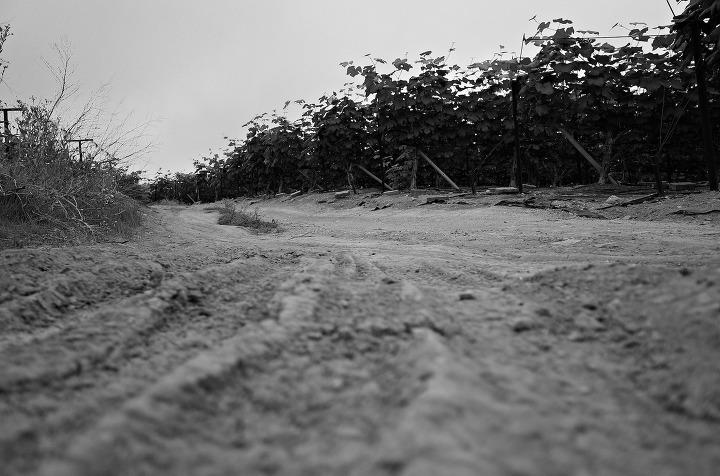 [사진에세이 : 환경그림책 시리즈 II] 소금밭 3 (자우녕)