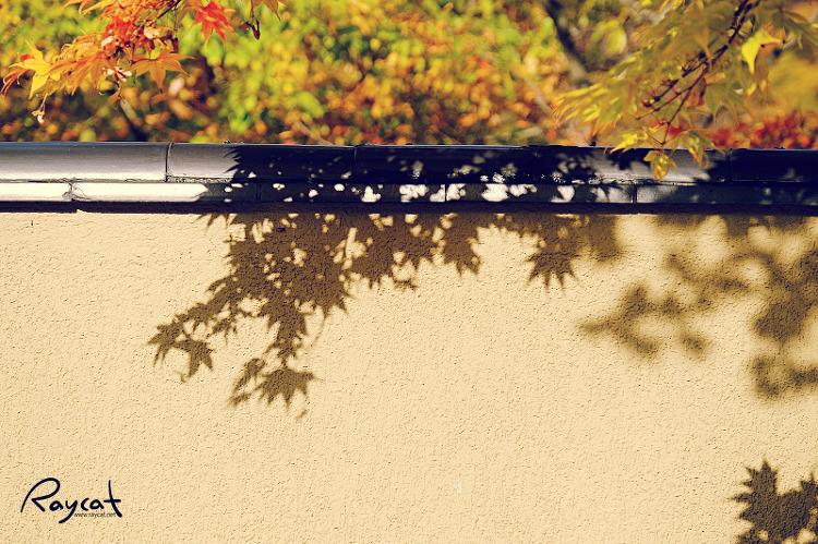 하나마키 온천 세슈카쿠 호텔 담장에 드리운 단풍 그림자