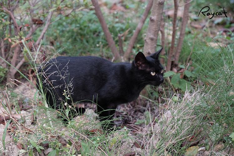 대륭마을의 검은고양이