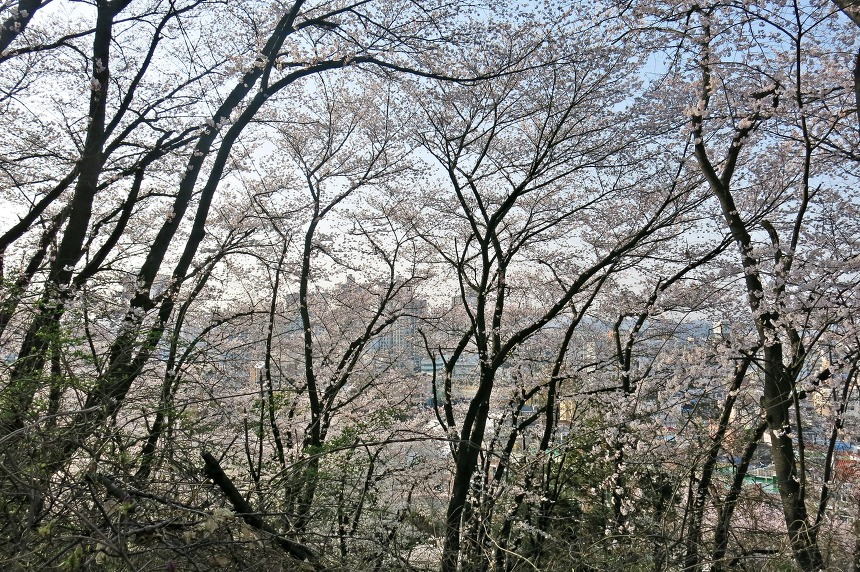 벚꽃동산 테미공원 풍경