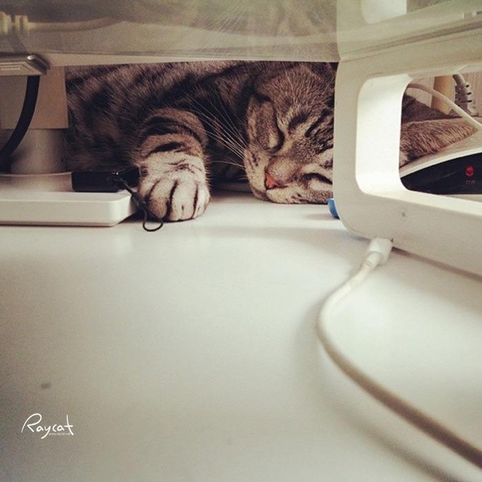 낮잠자는 야웅군