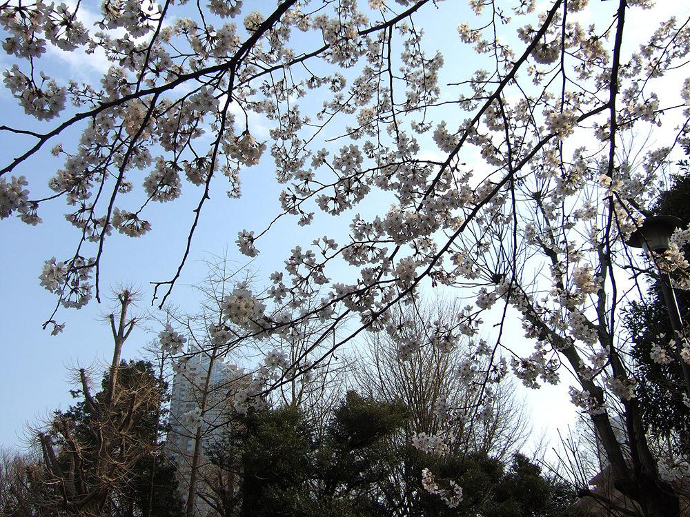 일본여행 - 다음 이야기 : 27658E50513CB88004DB60