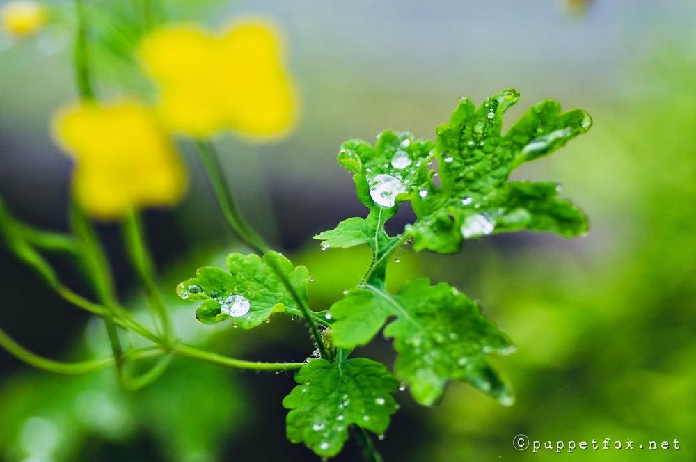0516-빗방울-2