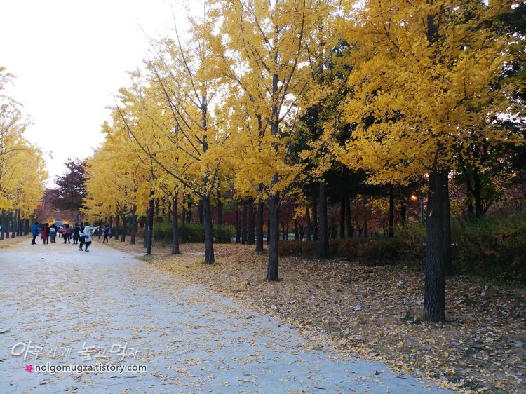 서울단풍 명소 서울숲 은행나무길