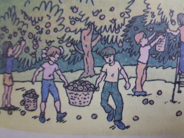 아제르바이잔 아제리어 교과서 Azərbaycan dili (러시아 학교) - 6학년 24 황금 새장 대신 나무 옹이를 선택한 종달새
