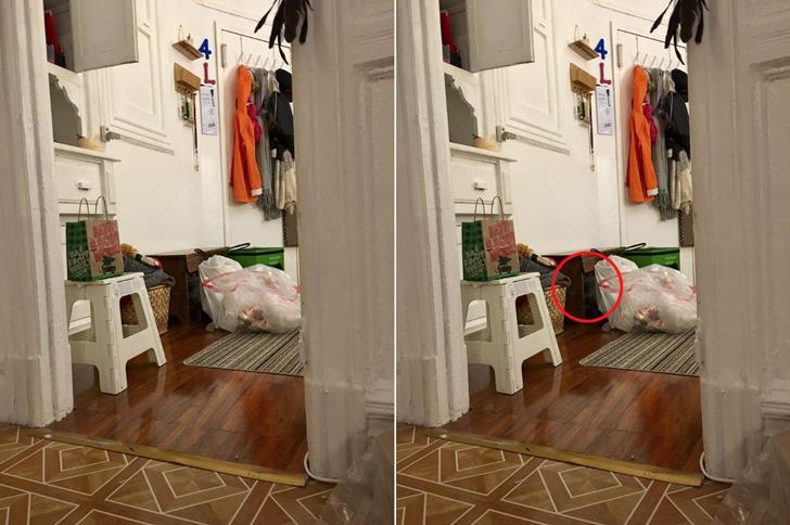 숨바꼭질의 달인, 사진 속에 숨은 고양이 찾기