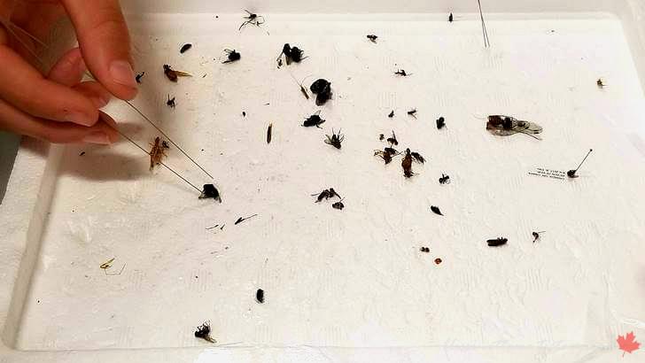 곤충 표본 만들기입니다