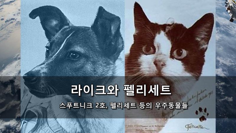 우주동물비행 - 스푸트니크 2호의 라이크 (개)와 펠리세트 (고양이) 등