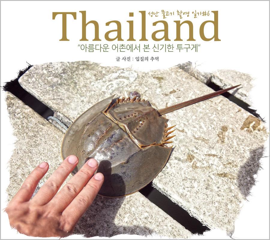 태국 꼬창 여행, 에일리언 닮은 신기한 투구게