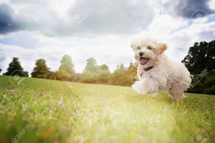 뛰는 강아지