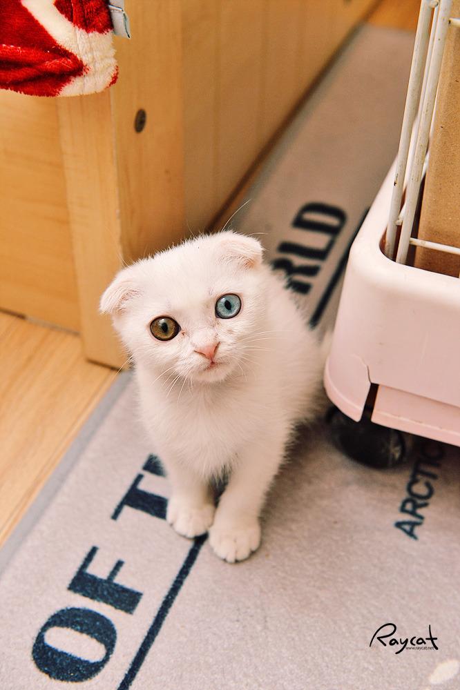 아기 고양이가 왔어요. 뭘 준비해야 할까?