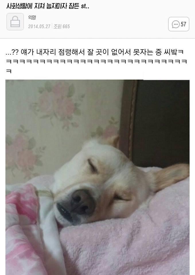 지쳐 잠든 개 썰