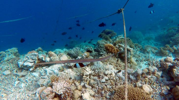 몰디브 스노쿨링 수중환경 사파리아일랜드