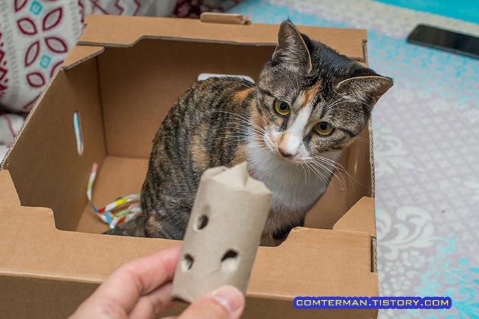고양이 간식통 장난감
