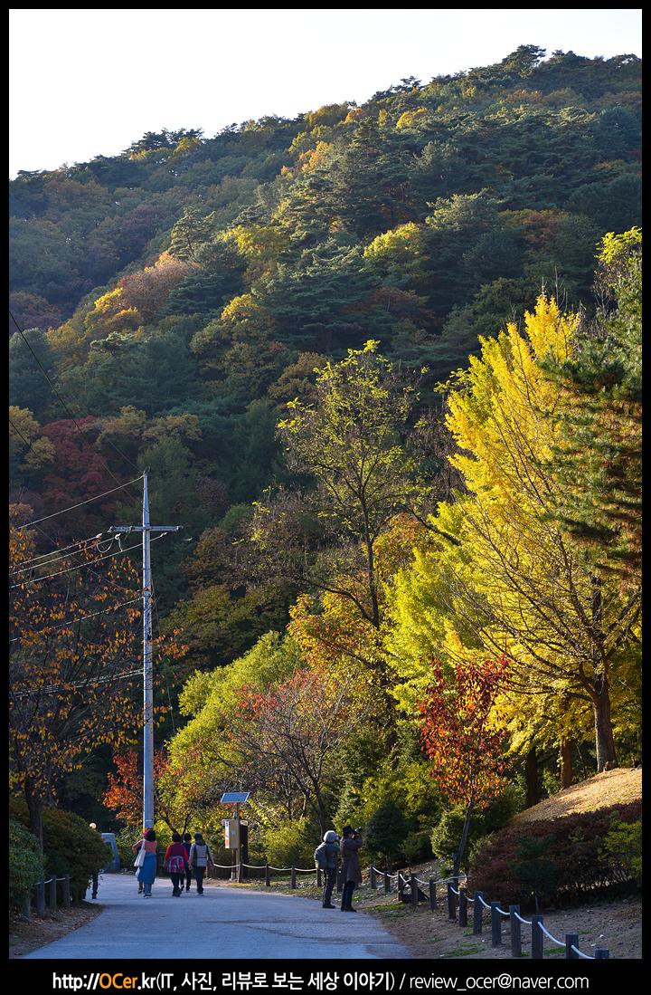 강원도 가볼만한 곳, 홍천 수타사, 홍천 은행나무숲, 은행나무숲, 수타사, 여행, 니콘 d810, d810, nikon d810, 사진, 니콘, 니콘 포토챌린저