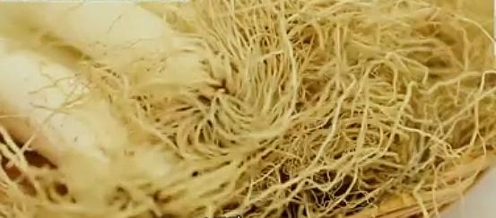 대파 뿌리