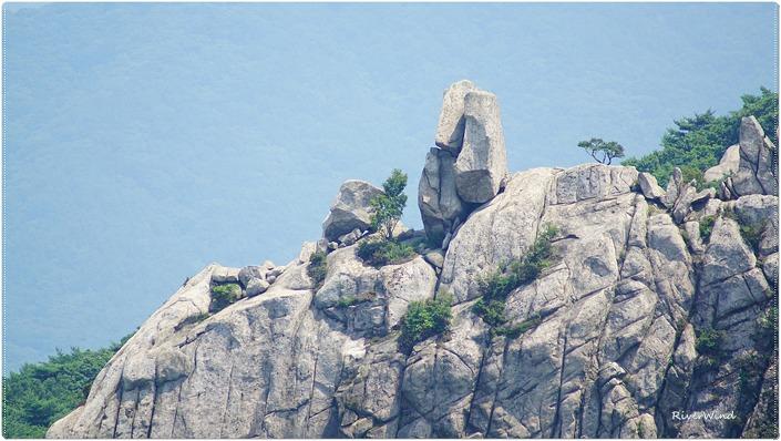 바위 위에 자라는 나무