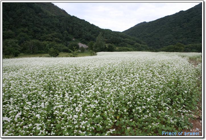 [Camp/강원도/인제] 페리에보다 맛있는 방동약수....방태산 자연휴양림 2